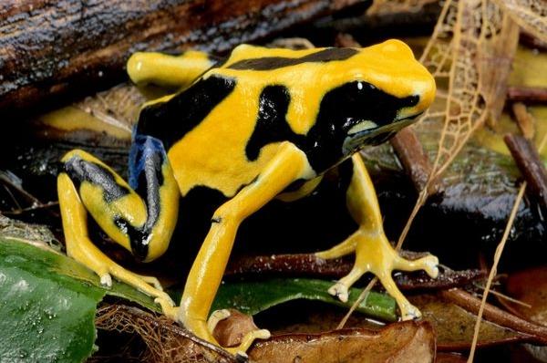 las 10 especies mas venenosas de