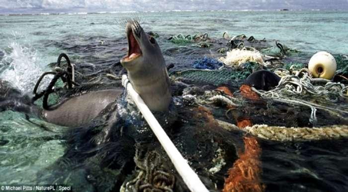 Resultado de imagen de PLASTICO EN LOS MARES
