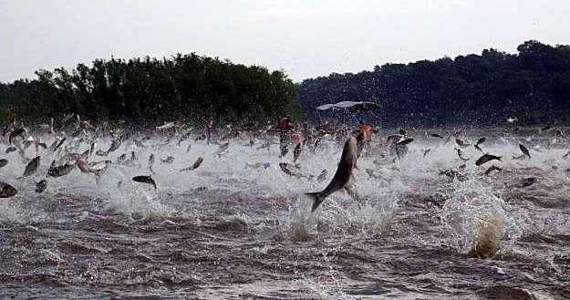 Nuestros rios en peligro taringueros necesitamos su for Carpa de rio